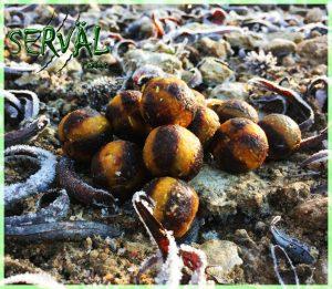 Réalise à la demande des bouillettes fraîche grâce à des matières premières de qualité.