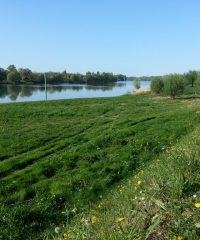 La Saône – Secteur Mogneneins – Lot M4