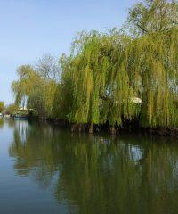 La Sèvre Niortaise – Secteur Rivière du Moulin du Marais