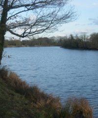 Le Bassin de Ville Morin