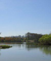 La Saône – Secteur Ormes
