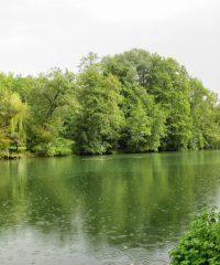 La Charente – Secteur Saint-Groux – Prairie de Villorioux