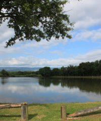 L'étang de la Cotille