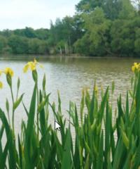 L'étang du carpiste