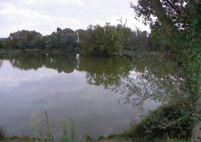 L'étang à Brochets