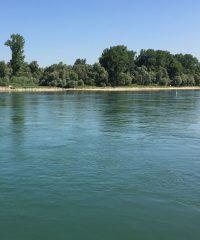 Le Rhin – Secteur Lauterbourg