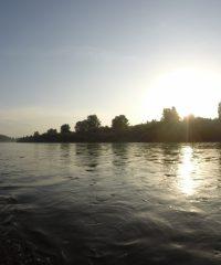 Le Vieux Rhin – Secteur Marckolsheim