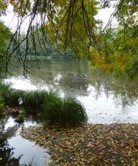 L'étang de Berdassit (Carpodrome)